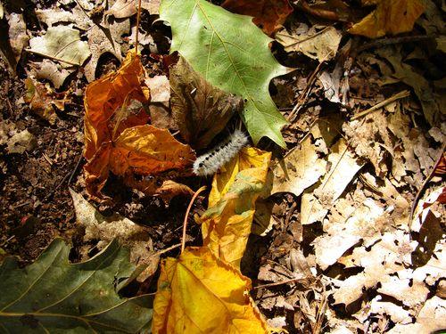 Caterpillar-forest-floor_-_West_Virginia_-_ForestWander
