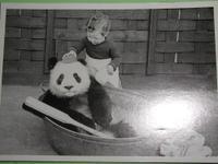 Pandawash
